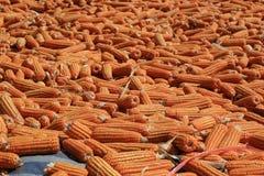 Corn feed Thailand Royalty Free Stock Photos