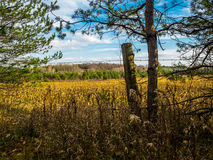 Corn Feild Thru The Fence On Fall. Blue Sky colorful Dry Stock Images