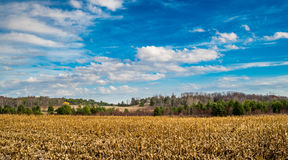 Corn Feild Thru The Fence On Fall Stock Image