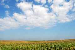 Corn field 05. Corn field over blue sky and clouds Stock Images