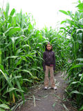 Corn field. Little girl standing in a path in a middle of a corn field Royalty Free Stock Photography