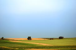 Corn field. Fresh green corn field on the blue sky Royalty Free Stock Photography