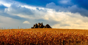 Corn field. In fall with house in back Stock Photography