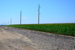 Corn Field Along a railroad track Royalty Free Stock Photo