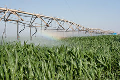 Corn Field And Rainbow Royalty Free Stock Photos