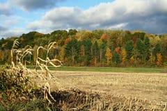Corn Field in Autumn Stock Photography