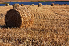 Corn field with bales of straw Stock Photo
