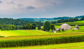 Corn field and barn on a farm, in rural York County, Pennsylvani Stock Photography