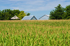 Corn field, and barns Stock Image