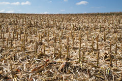 Corn field in Bavaria (Germany) after harvesting Royalty Free Stock Photography