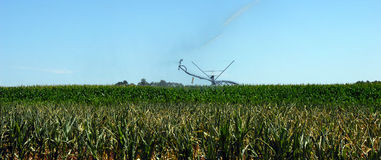 Corn field being irrigated Stock Photos
