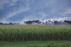 Corn Field Being Watered Stock Photos