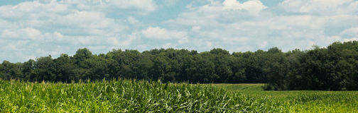 Corn Field-Blue Sky-banner Royalty Free Stock Photo