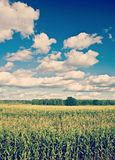 Corn field and cloudy sky instagram stile Stock Image