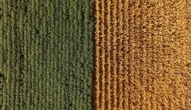 Corn Field colors Royalty Free Stock Images