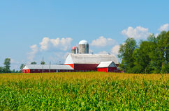 Corn Field with Colourful Barn Royalty Free Stock Photography