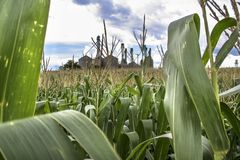Corn field. With grain mill background in Brazil Stock Image