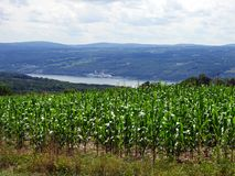 Corn field crop high above Seneca Lake in FingerLakes. Seneca Lake is the largest of the glacial Finger Lakes of the U.S. state of New York, and the deepest lake stock images