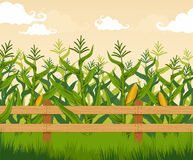 Corn field. Detailed countryside landscape stock illustration
