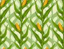 Corn field. Detailed seamless pattern royalty free illustration