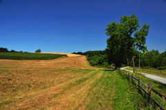 Corn field and dirt road Royalty Free Stock Image
