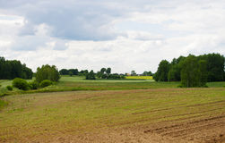 Corn field in early summer Royalty Free Stock Photography