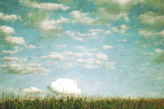 Corn field - effect of old photos. Clouds in the sky over a field of corn - effect of old photos royalty free stock photo