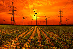 Corn field with electricity pylon and wind turbines at sunset Royalty Free Stock Image