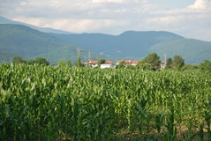 Corn Field and Farm 2 Royalty Free Stock Photography