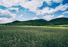 Corn Field with Farm House Stock Image