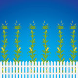 Corn field. And fence in front of a blue sky.Vector illustration Stock Images