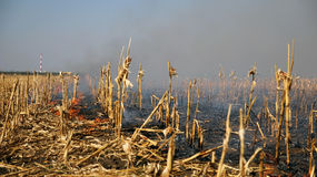 Corn Field on Fire. Fire in the cornfield after harvest Royalty Free Stock Photo