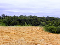Corn-field by forest Stock Images
