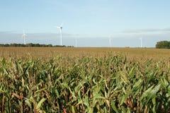 Corn field in France. Corn field in Aisne, Picardie region of France stock photos