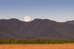Corn Field with full moon over mountains Royalty Free Stock Photography