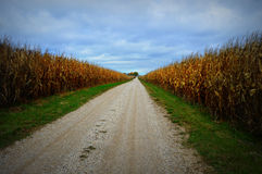 Corn Field, Gravel Road Stock Photo