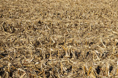 Corn Field After Harvest Stock Photography