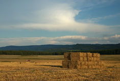Corn field after harvest straw stack, early evenin Royalty Free Stock Image