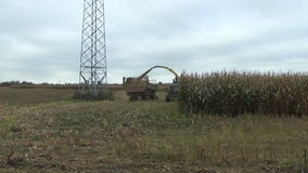 Corn field harvesting stock video footage
