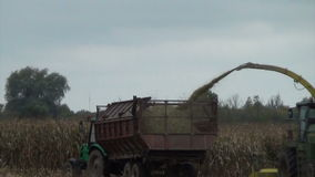 Corn field harvesting stock footage