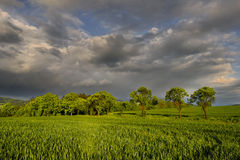 The corn field. Heavy clouds rushing the field ss plum alley Stock Photography
