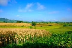 Corn field hill blue sky Stock Image