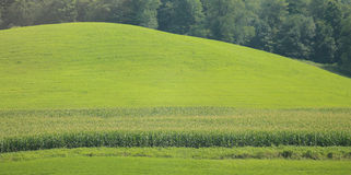 Corn field and hills Royalty Free Stock Photography