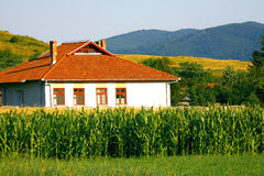 Corn field house Royalty Free Stock Images