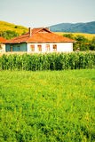 Corn field house Stock Photography