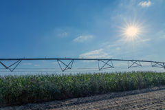 Corn field and irrigation equipment Royalty Free Stock Photos