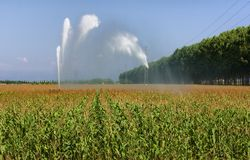 Corn field irrigation Royalty Free Stock Photo