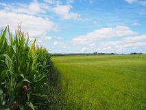 Corn field. Limits and green grass land, clouds and blue sky Stock Image