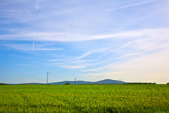 Corn field with mountain Royalty Free Stock Photo