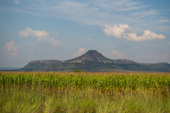 Corn Field and Mountains near Clarens, Free State, South Africa Stock Photo